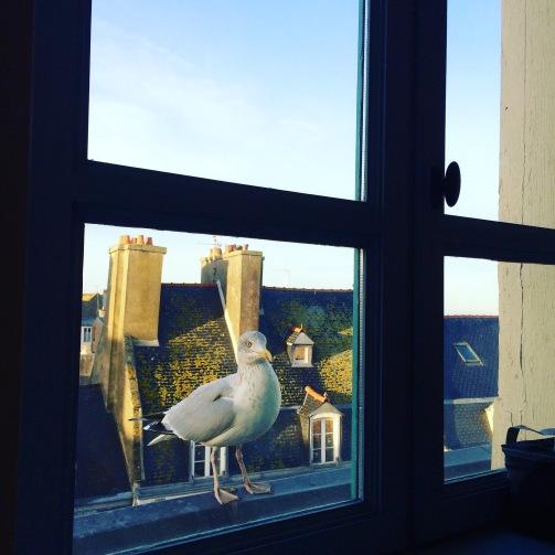 Goeland à ma fenêtre